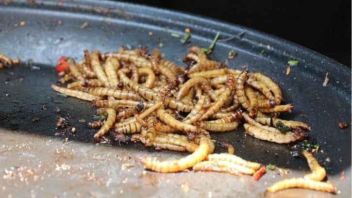 What Kind Of Fish Can You Catch With Mealworms